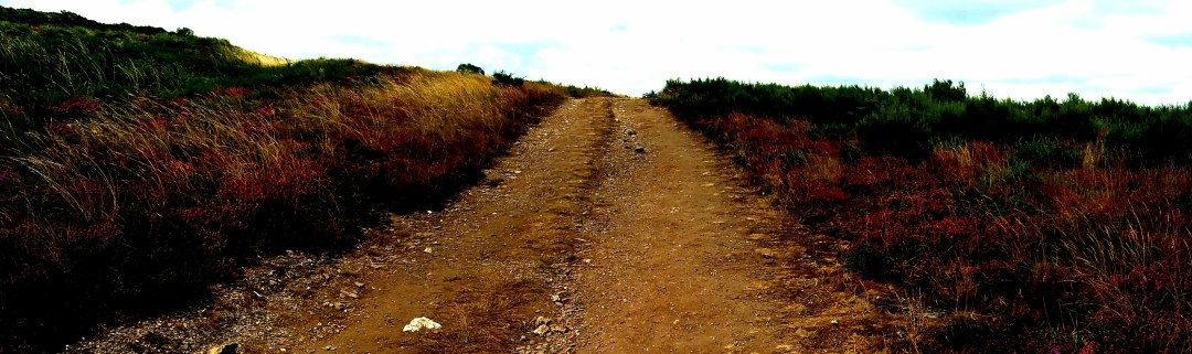 5 Reasons to Live: Notes from the Camino de Santiago